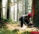 Kokia leidimų kirsti mišką išdavimo tvarka?