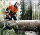 Pakeistas Bendrųjų miškų ūkio reikmių finansavimo programos lėšų paskirstymas 2021–2023 metams
